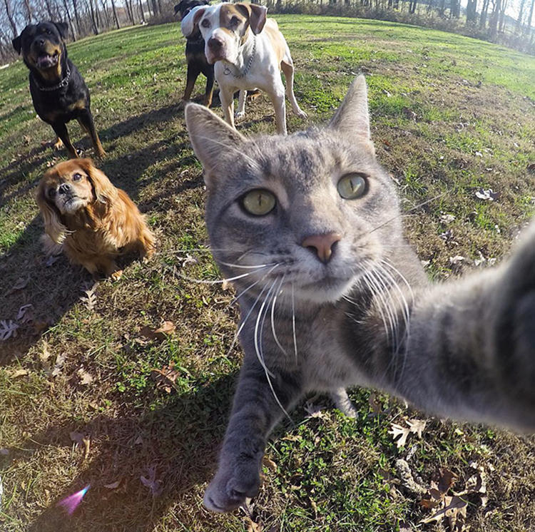 manny-cat-takes-selfies-gopro-3