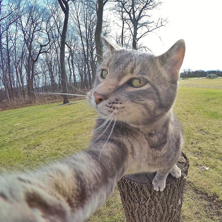 manny-cat-takes-selfies-gopro-4