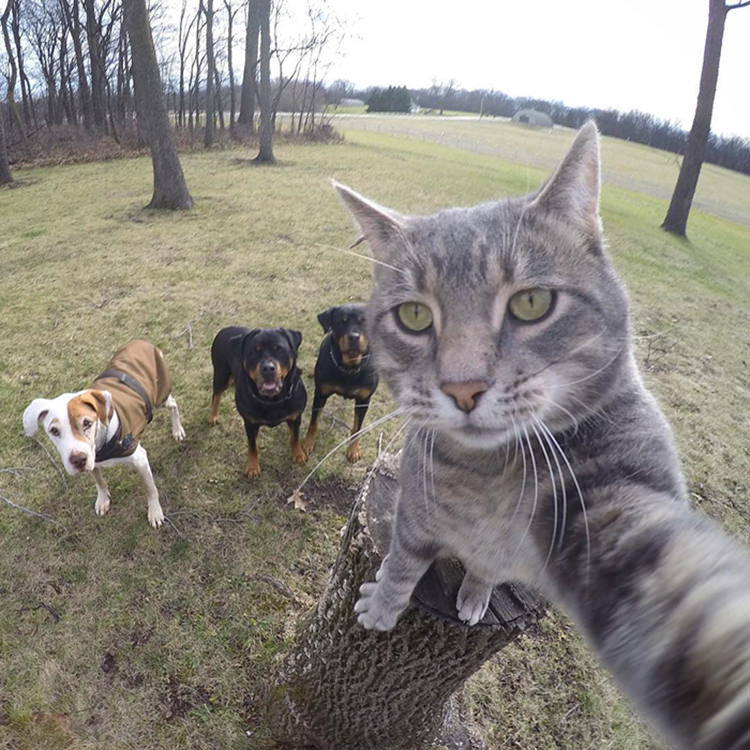 manny-cat-takes-selfies-gopro-5