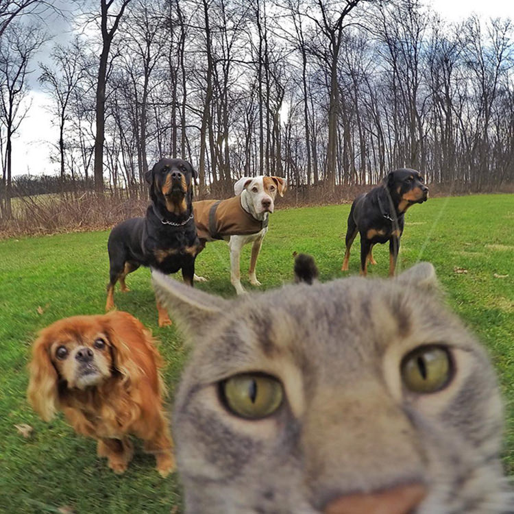 manny-cat-takes-selfies-gopro-6