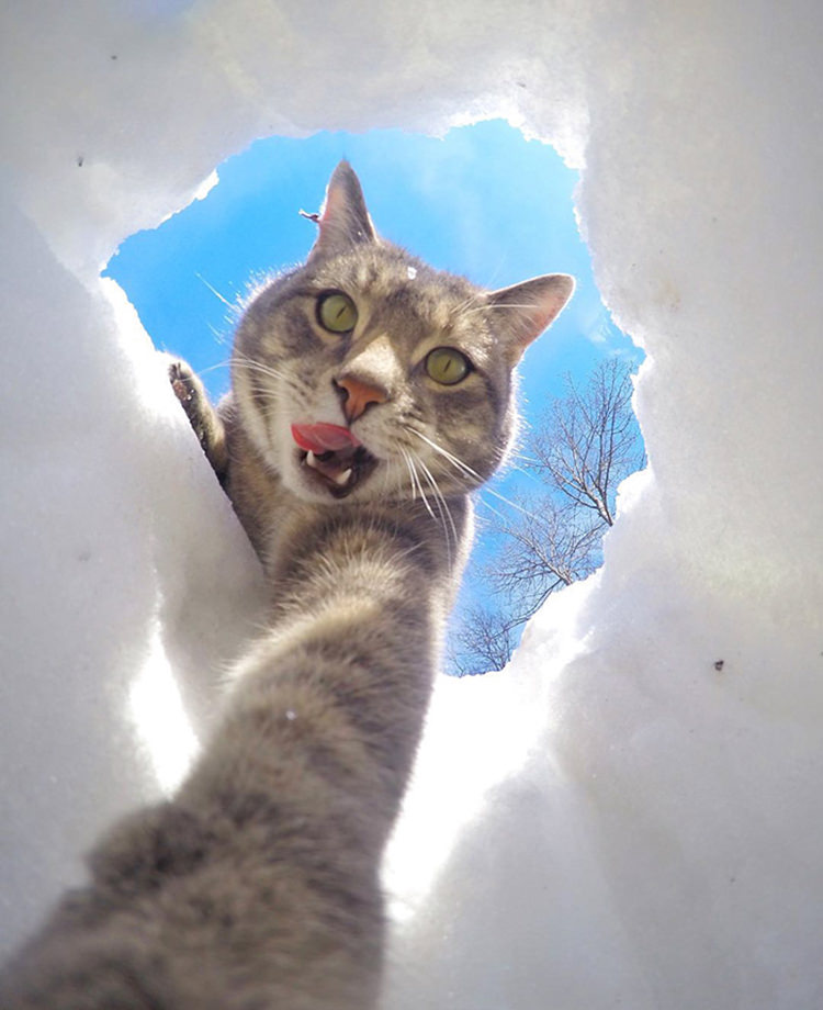 manny-cat-takes-selfies-gopro-7