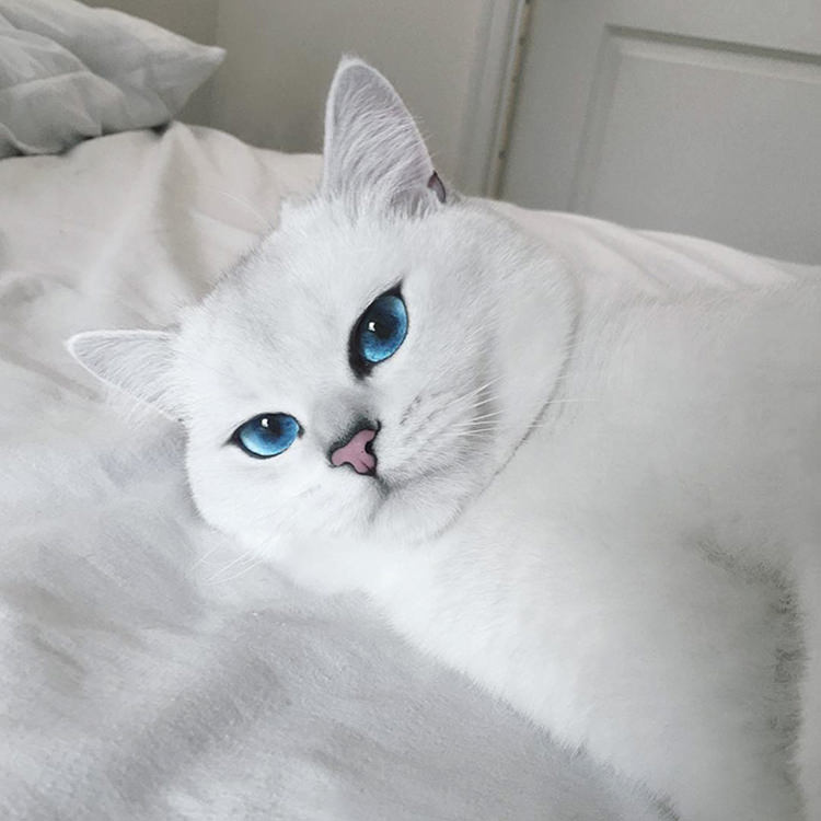 cat-with-beautiful-eyes-1