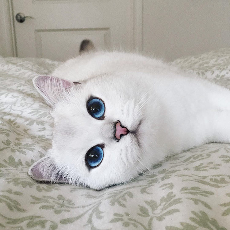 cat-with-beautiful-eyes-3