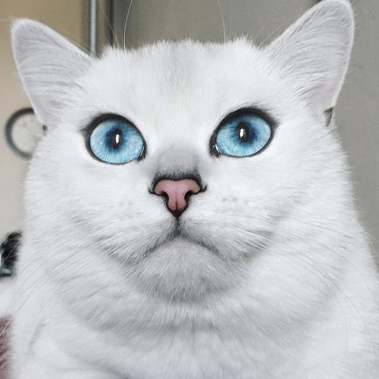 cat-with-beautiful-eyes-4
