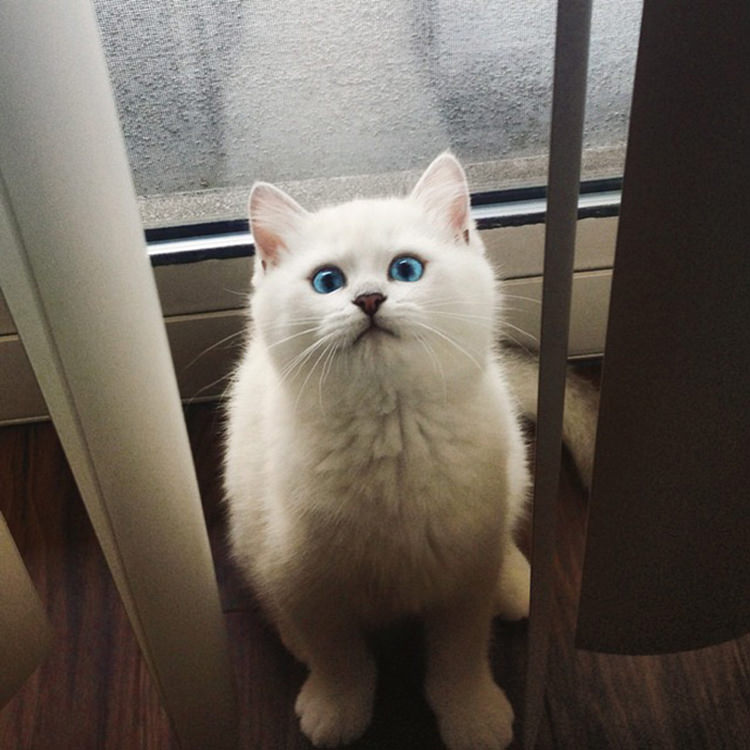cat-with-most-beautiful-eyes-1