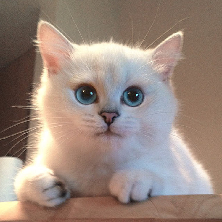 cat-with-most-beautiful-eyes-2