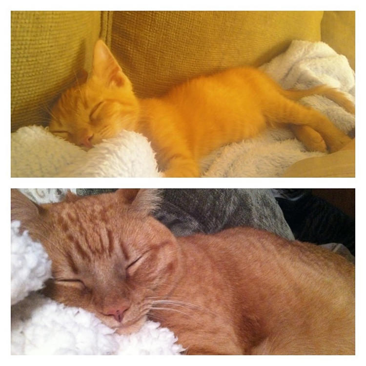 cats-before-and-after-2