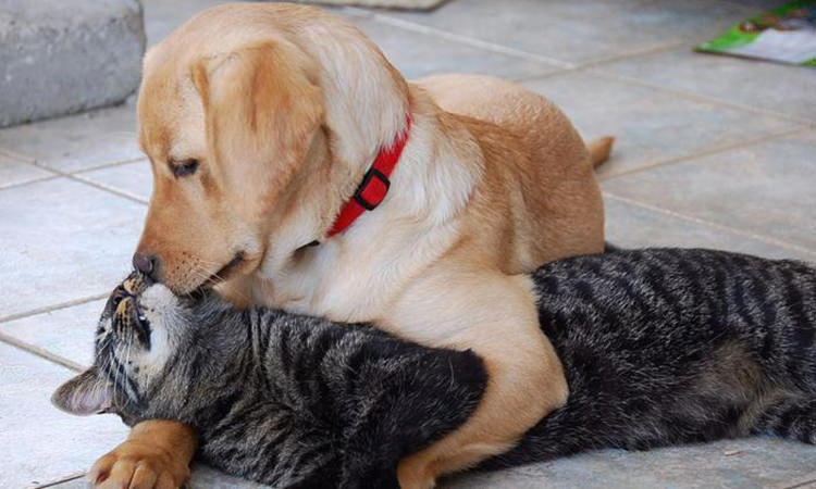 36 Beautiful Pictures That Prove Love Exists In The Animal Kingdom Too Top13