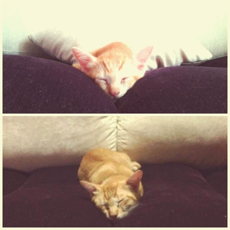 cute-cats-growing-up-1