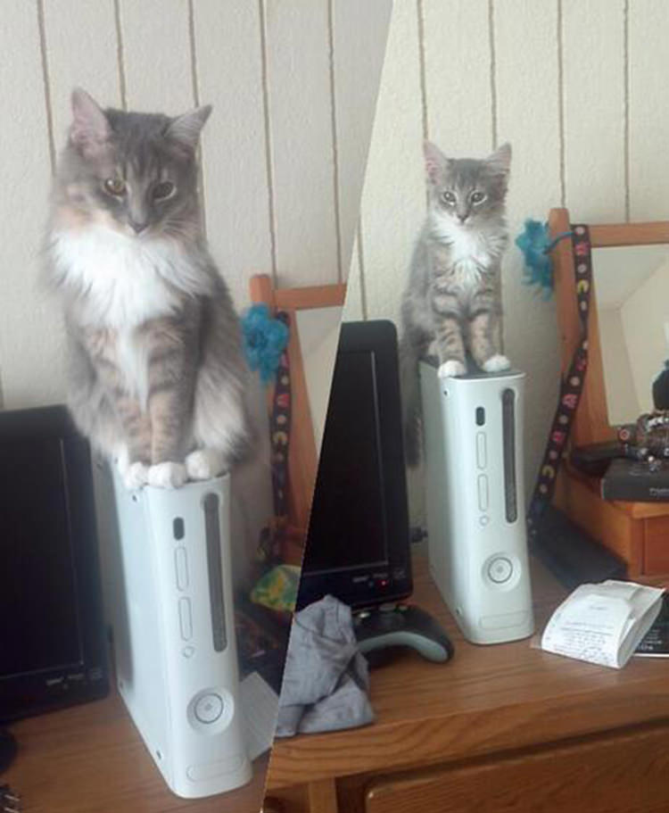 cute-cats-growing-up-2