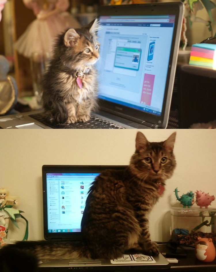cute-cats-growing-up-3
