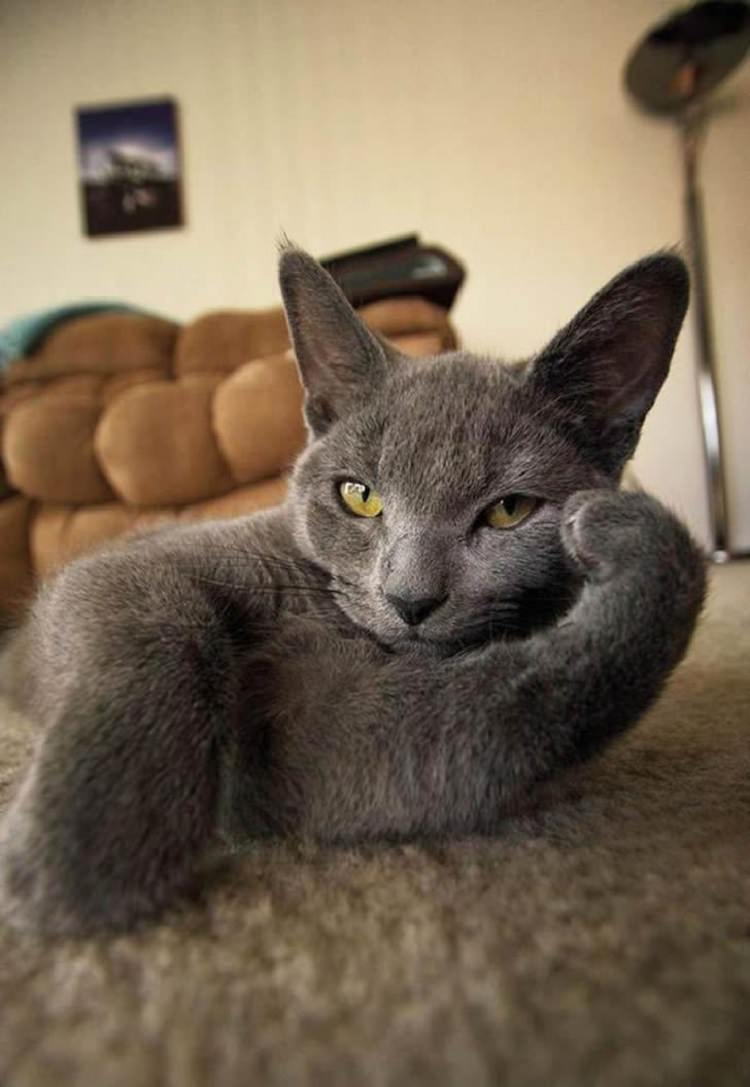 cat-posing-for-pictures-1