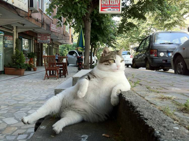 cat-posing-for-pictures-7
