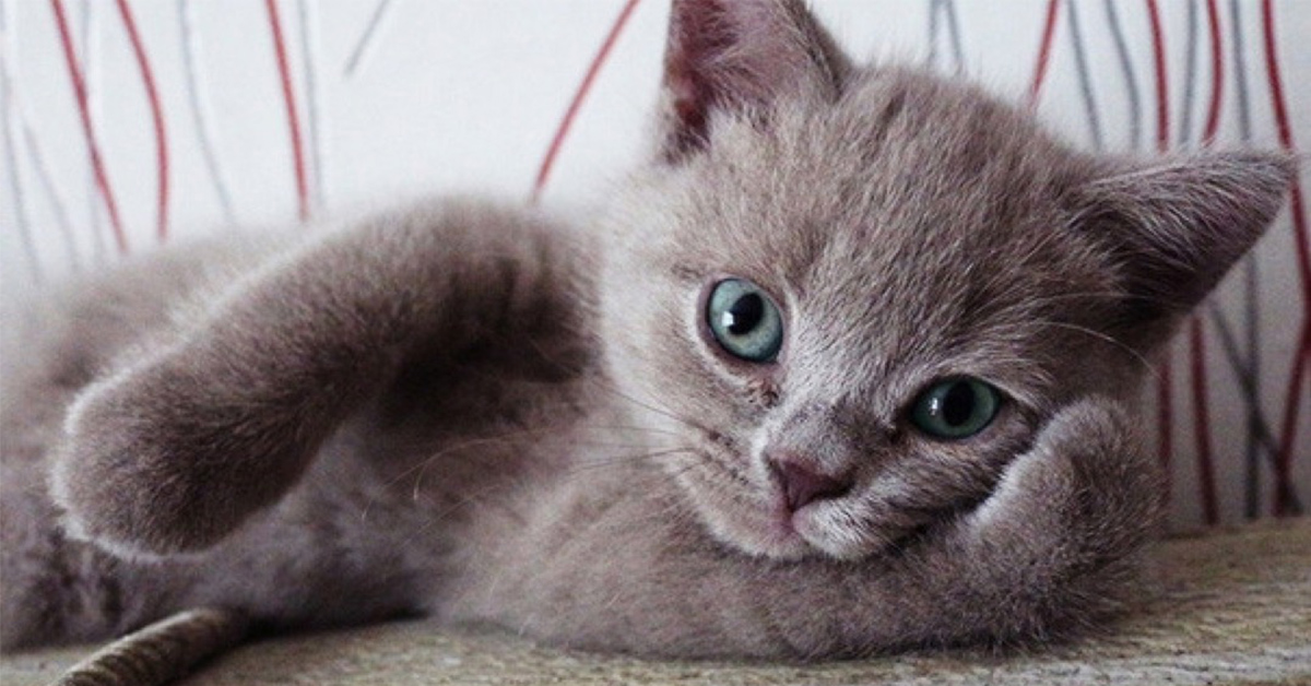 26 Animals Posing For Pictures Like Pros Top13