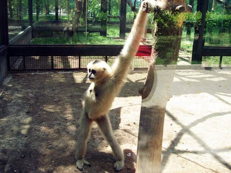 funny-animals-posing-for-pictures-6