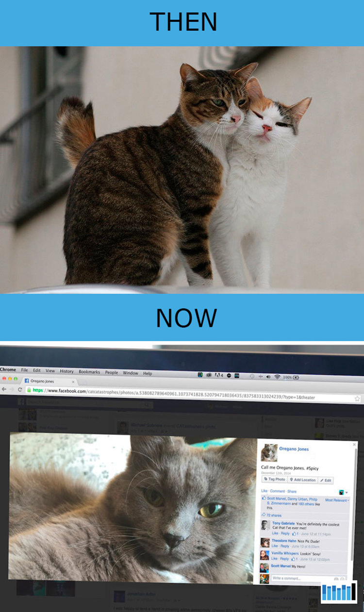 cats-then-now-funny-technology-11