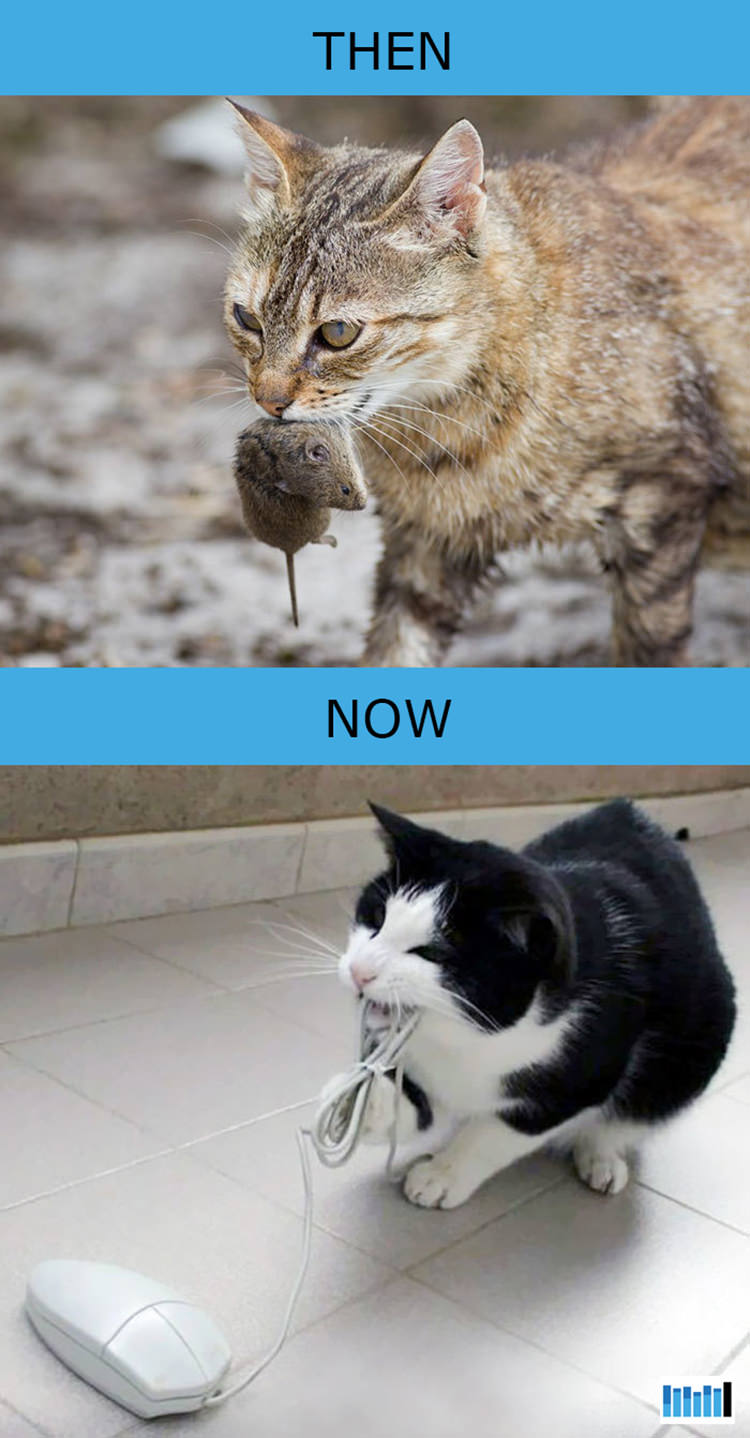 cats-then-now-funny-technology-12