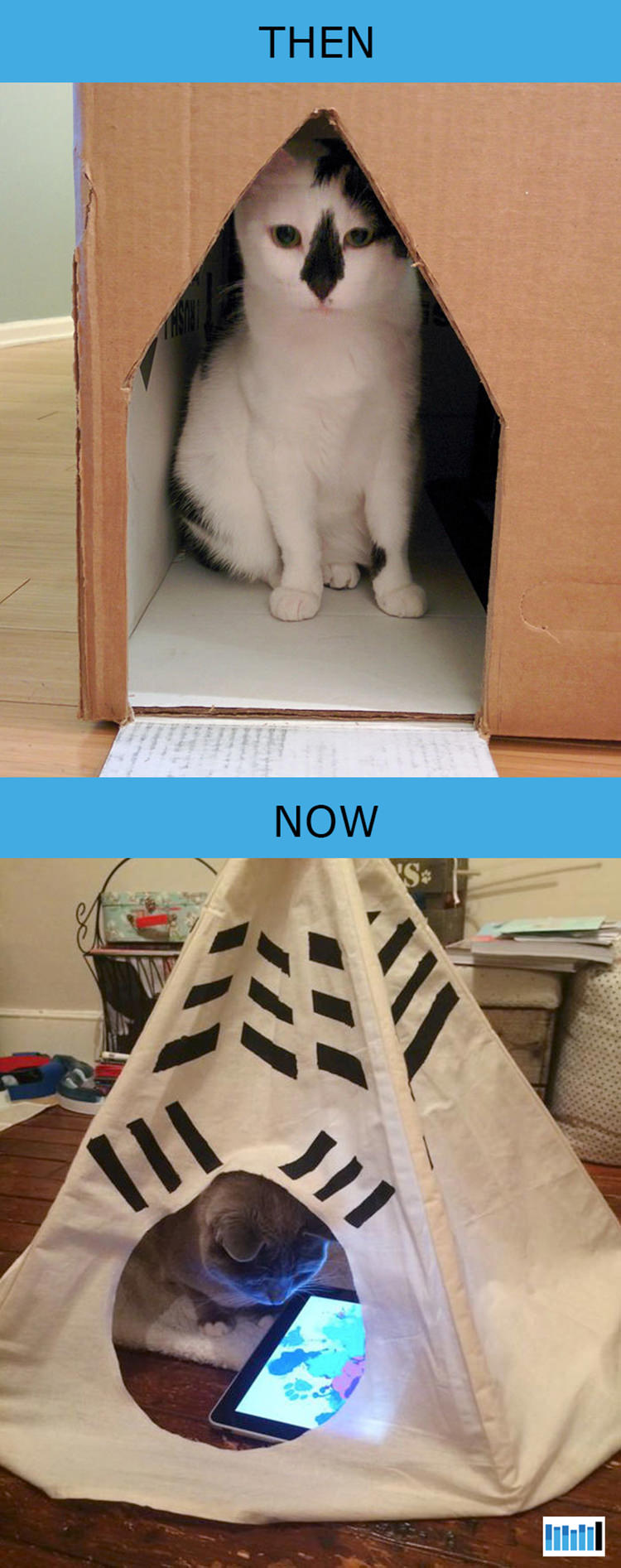 cats-then-now-funny-technology-13