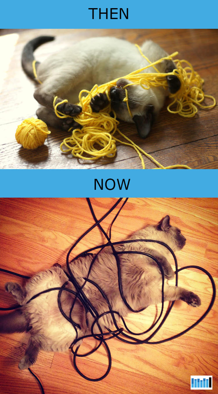 cats-then-now-funny-technology-4