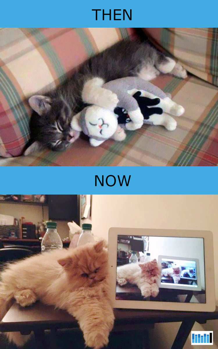 cats-then-now-funny-technology-7