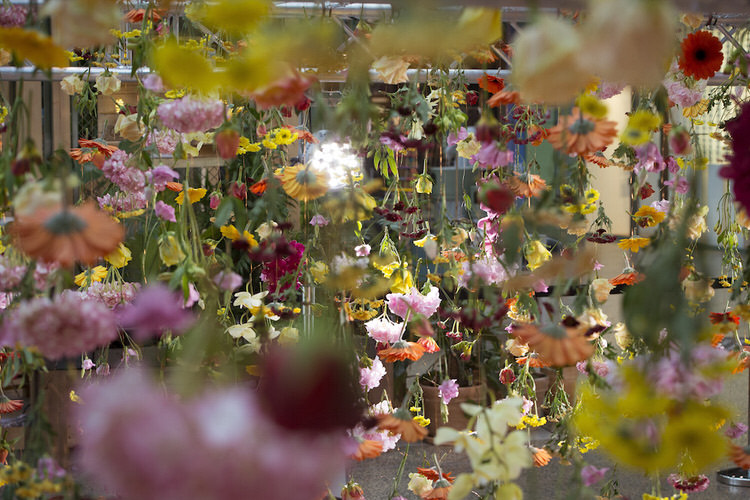 suspended-live-garden-rebecca-louise-law-1