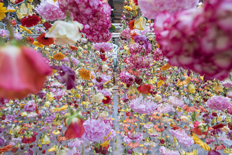 suspended-live-garden-rebecca-louise-law-5