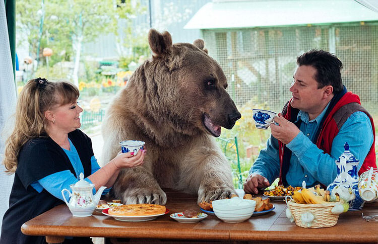 adopted-russian-bear-1
