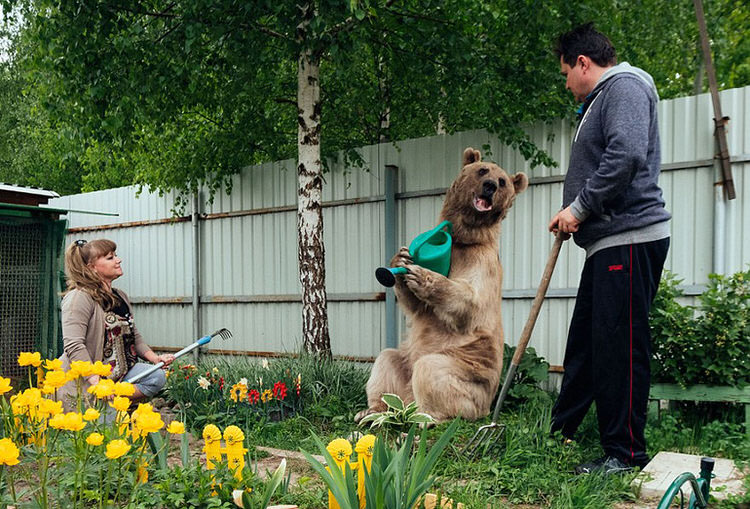adopted-russian-bear-10