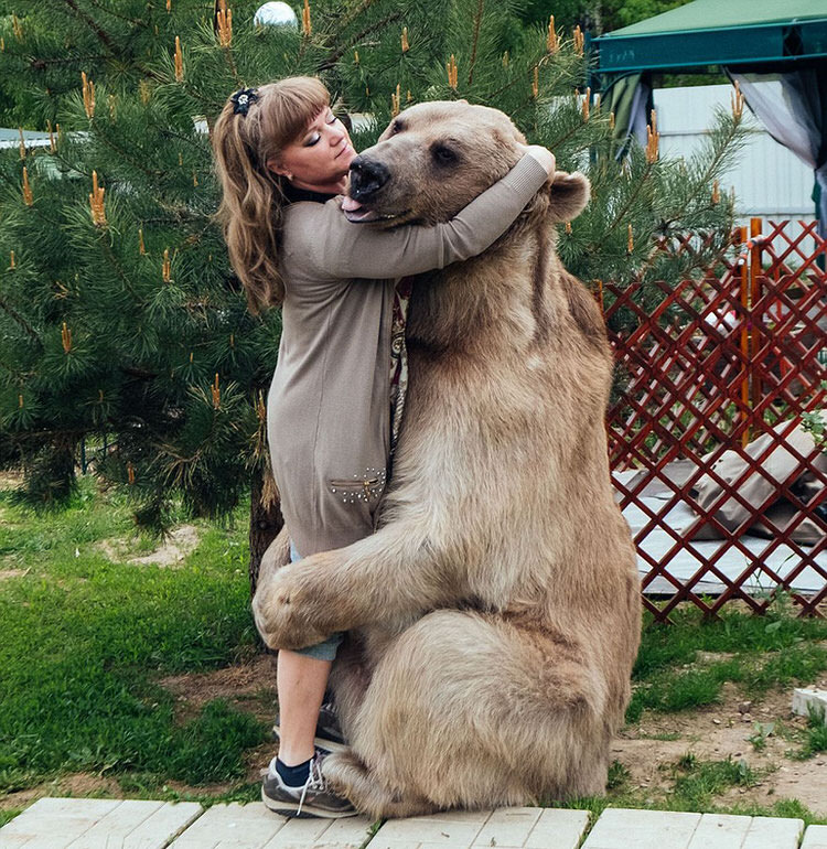 adopted-russian-bear-3