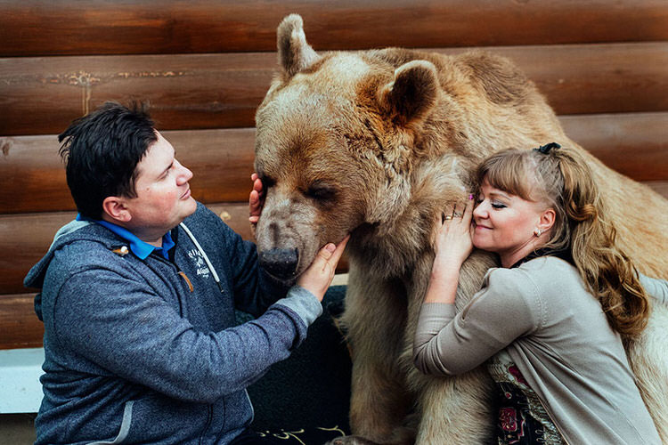 adopted-russian-bear-5