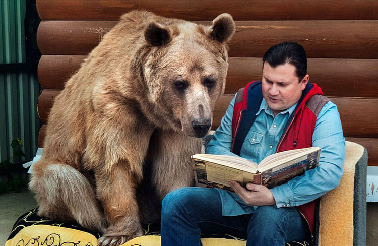 adopted-russian-bear-7