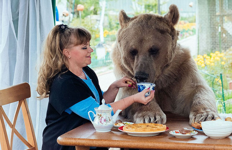 adopted-russian-bear-8