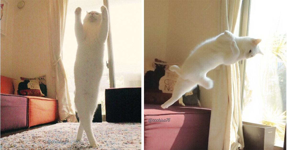 Ballet Cat Dances Like Nobody S Watching Top13