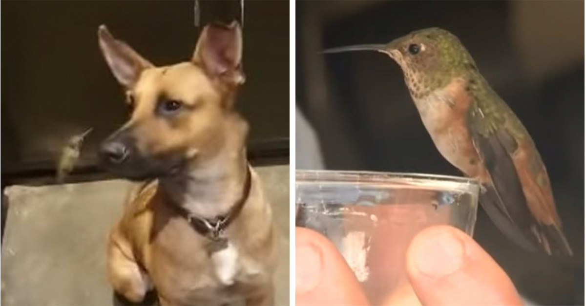 Dog Rescues Hummingbird