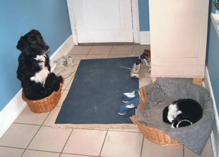 cats-steal-dog-beds-1