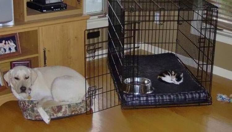 cats-steal-dog-beds-10