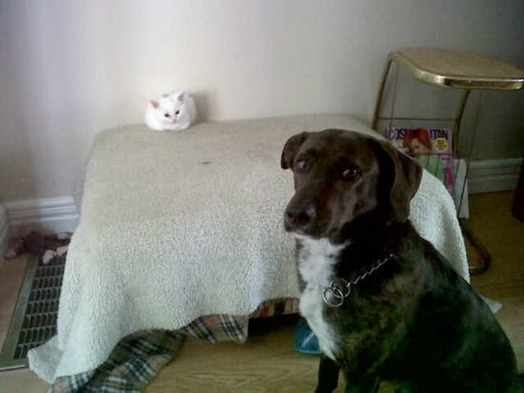 cats-steal-dog-beds-12