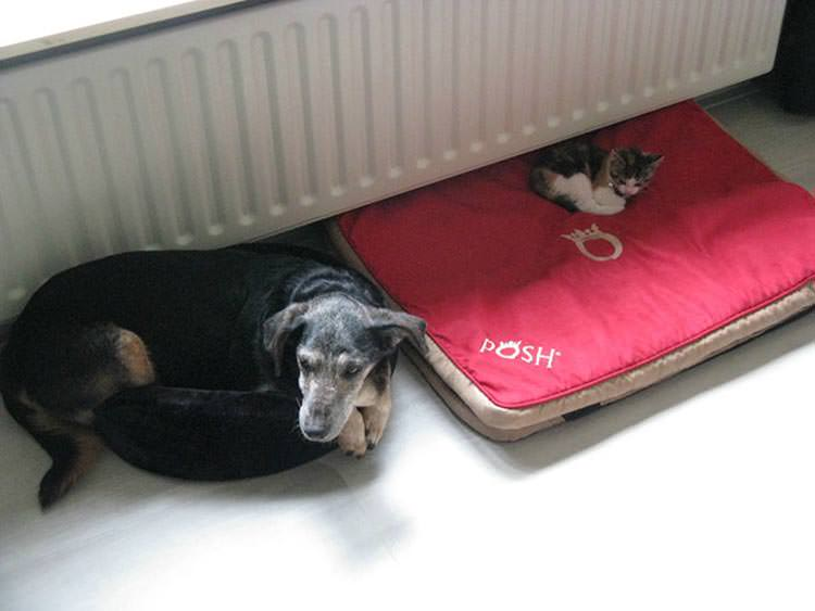 cats-steal-dog-beds-15