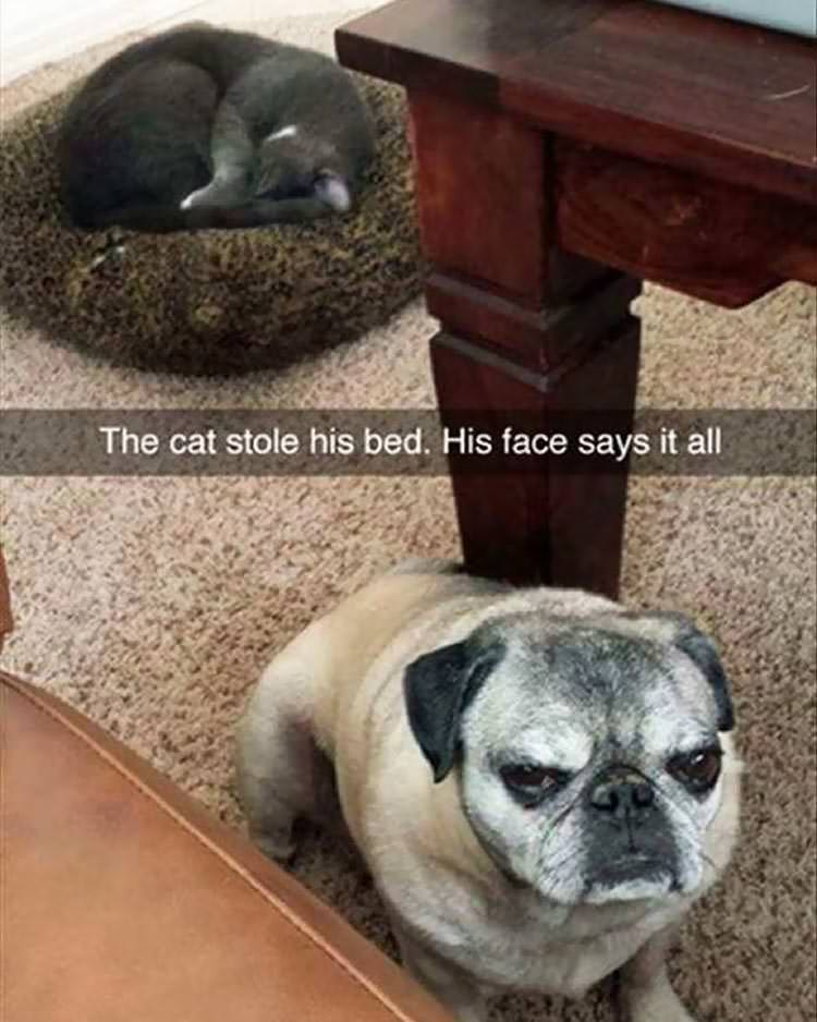 cats-steal-dog-beds-2