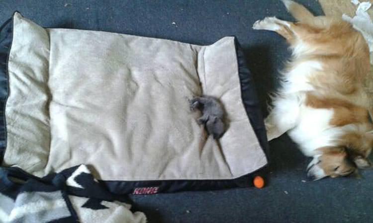 cats-steal-dog-beds-3