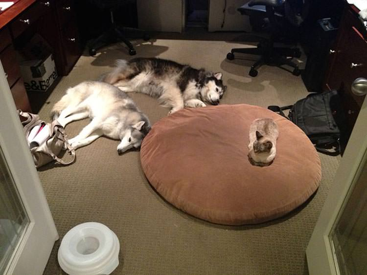 cats-steal-dog-beds-4