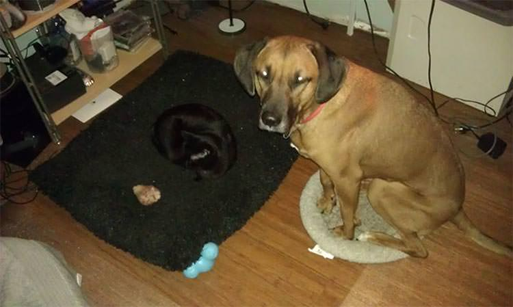 cats-steal-dog-beds-5