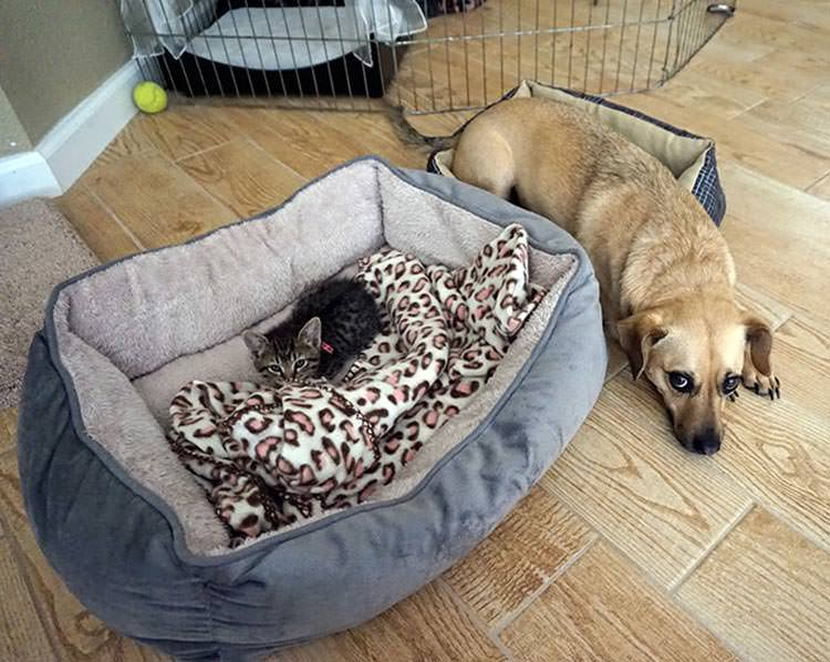 cats-steal-dog-beds-7