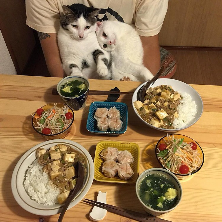 cats-watch-humans-eat-2