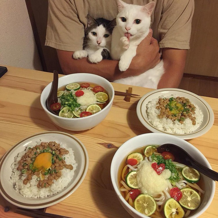 cats-watch-humans-eat-3