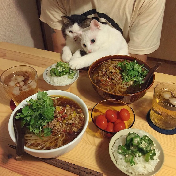 cats-watch-humans-eat-4