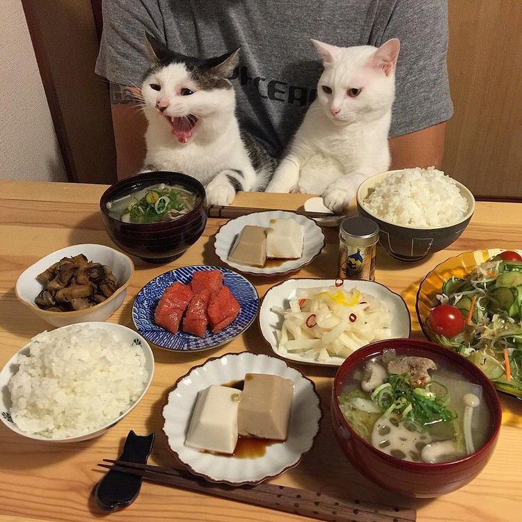 cats-watch-humans-eat-5