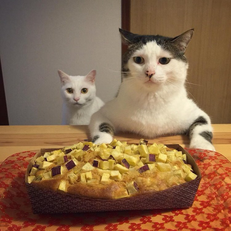 cats-watch-humans-eat-6