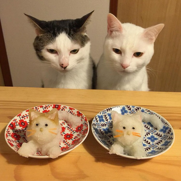 cats-watch-humans-eat-7