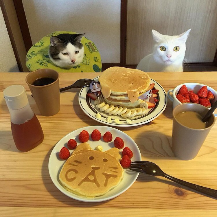 cats-watch-humans-eat-8